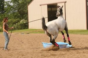 Emotional horse, emotional rider?