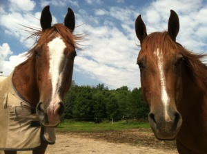 Scrapper and Popcorn in pasture