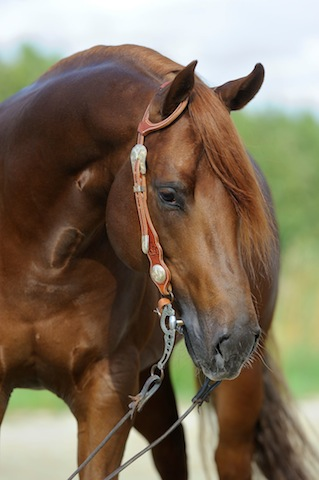 Jac's brother, one of Roxy's foals.
