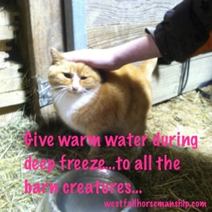 barn cats need warm water too