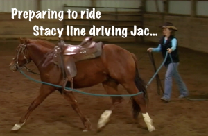 Stacy Westfall colt starting line driving ground work
