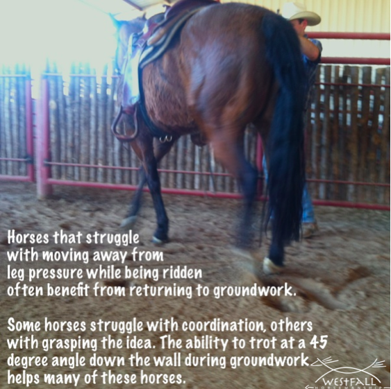 Teaching a horse to move away from leg pressure.