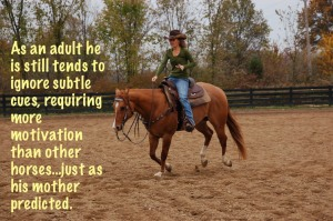 some horses ignore subtle cues