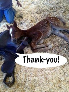 Thank you from a foal