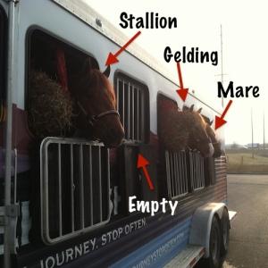Hauling stallion gelding mare