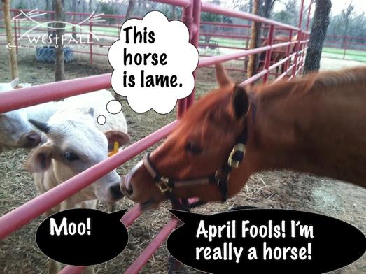 Horse jokes - photo#21