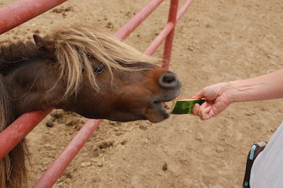 are watermelon rinds good for horses