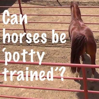 Can horses be 'potty trained'?