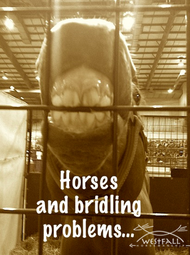 Horses put things in their mouths all the time...but sometimes not when we ask.