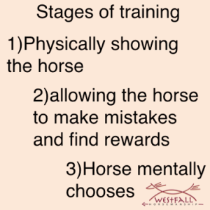 stages of training a horse