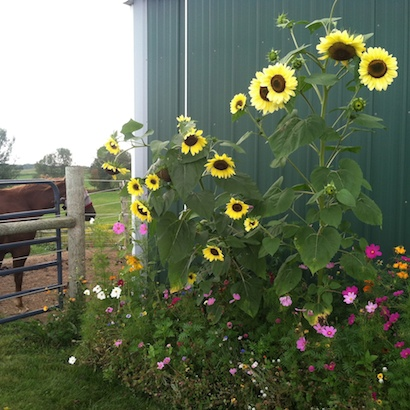 flowers decorating a horse barn