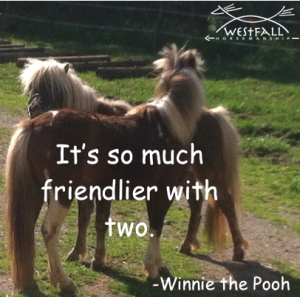 It's so much friendlier with two. Winnie the Pooh