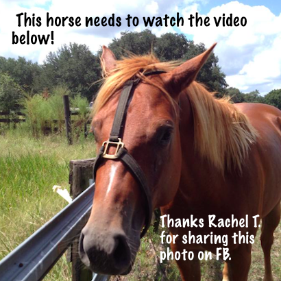 Rachel T. shared a photo of her horse escaping from the halter.