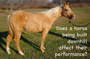 What do u think the affects of quarter horses being built downhill have to do with their performance?