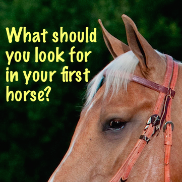 What should you look for in your first horse?