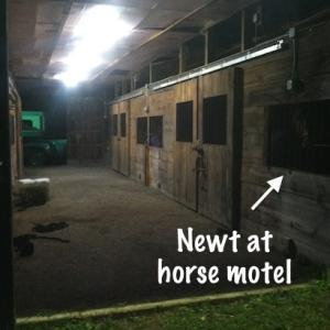 horse hotel