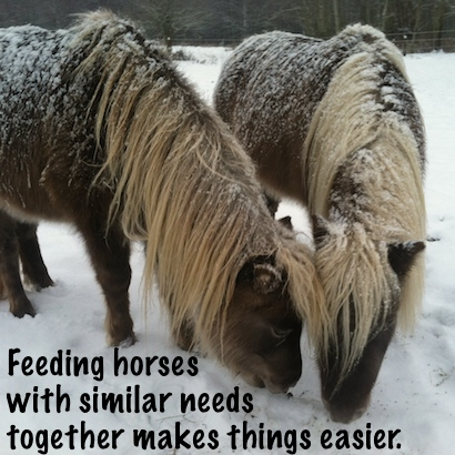 Feeding horses with similar needs together makes things easier.