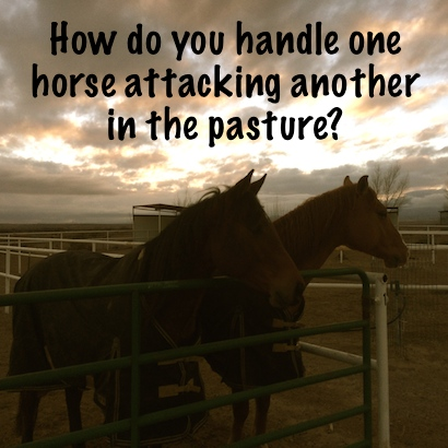 How do you handle one horse attacking another in the pasture?