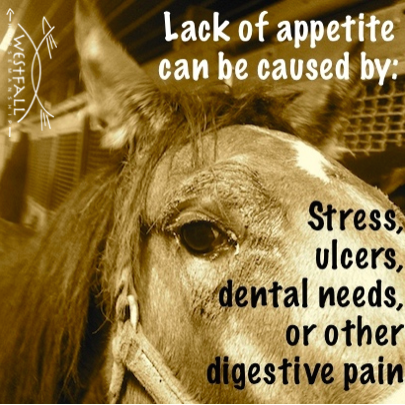 Lack of appetite in a horse can be caused by stress,%0Aulcers, dental needs, or other digestive pain