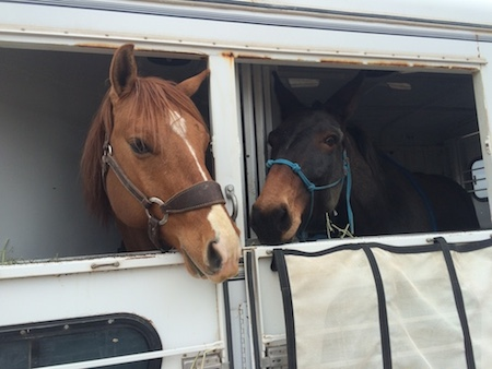 Newt saying hi to his new friend, the mule.