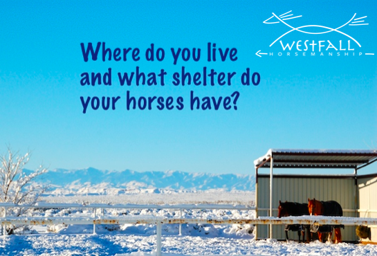 Where do you live and what shelter do your horses have?