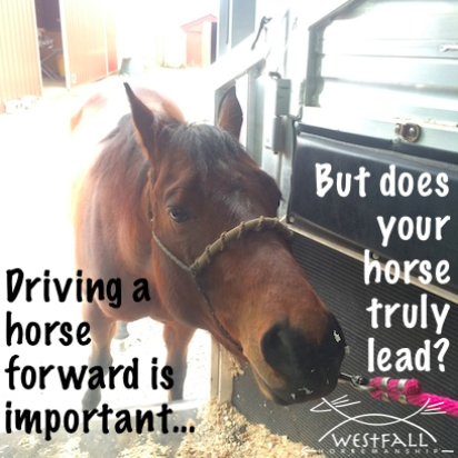 does your horse truly lead?