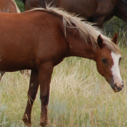 What is best age to start a horse?