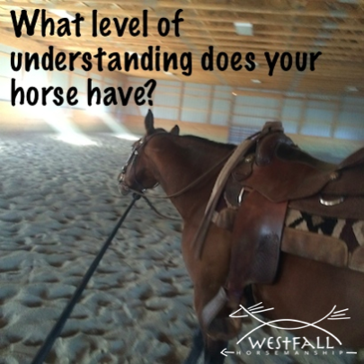 What level of understanding does your horse have?